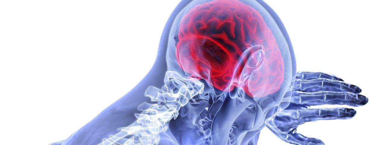 Neurologie - Gehirn